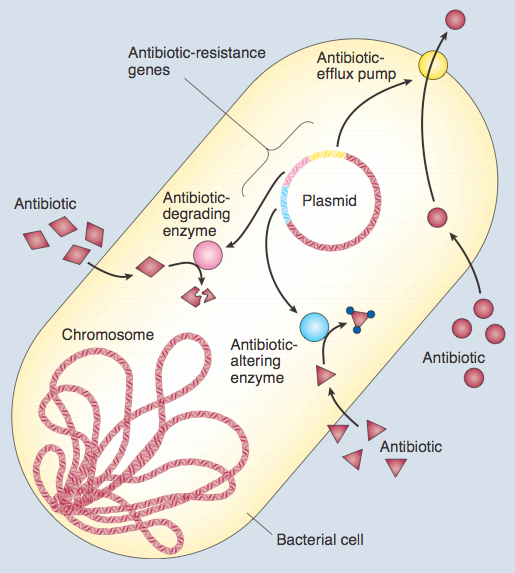 Os desafios da resistência bacteriana