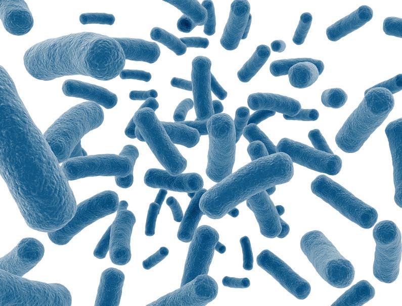Microbioma em foco: últimas novidades científicas
