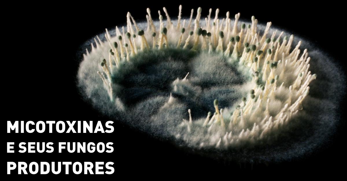 Algumas micotoxinas e seus fungos produtores