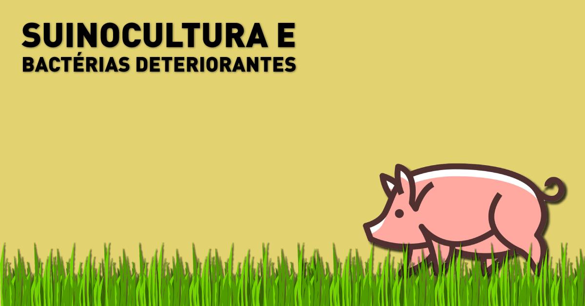 Suinocultura e bactérias deteriorantes
