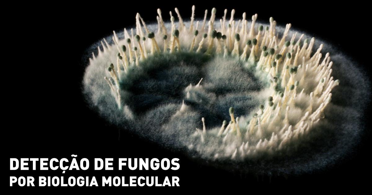 Detecção de fungos por biologia molecular