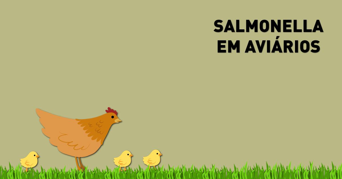 Salmonella em aviários